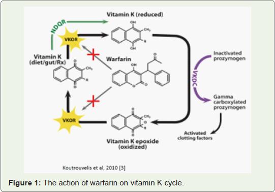 Mechanism of action of warfarin biology essay